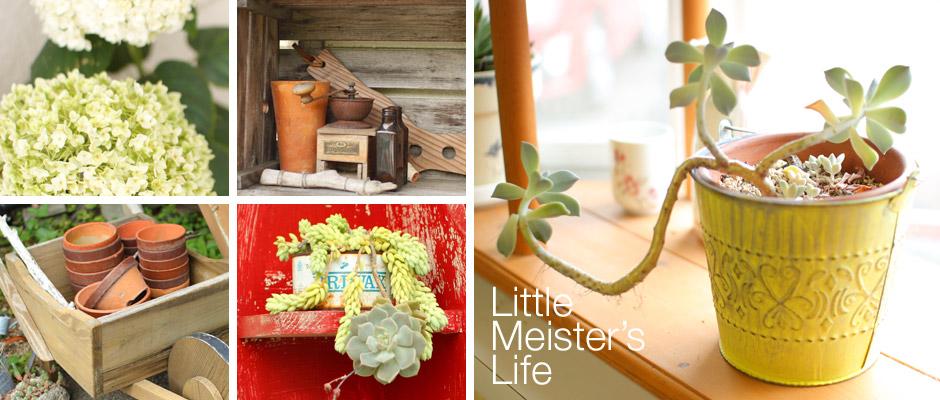 Little Meister's Life